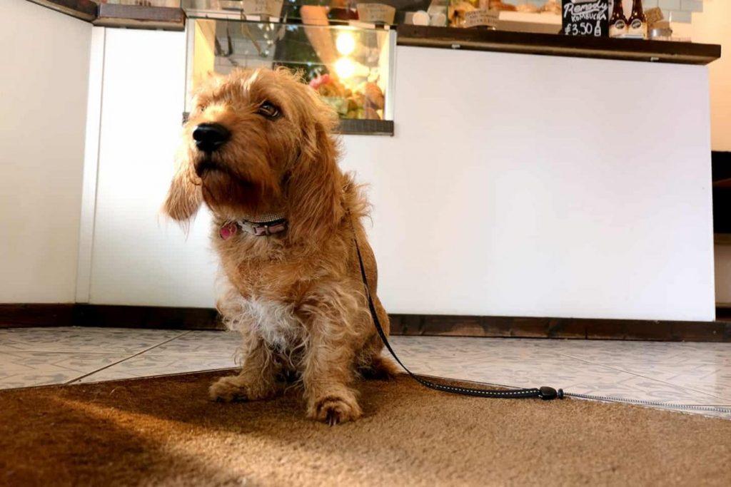My-Dog-Friendly-London-By-Amber-The-Basset-Fauve-De-Bretagne-80-Stones-3-1170x780