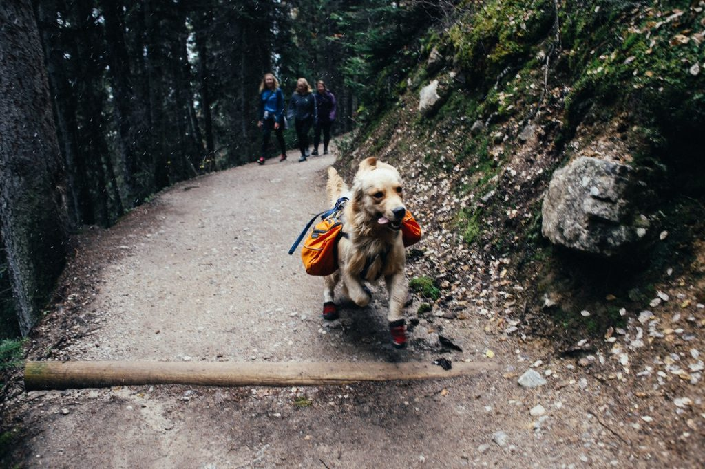 people travelling with dog