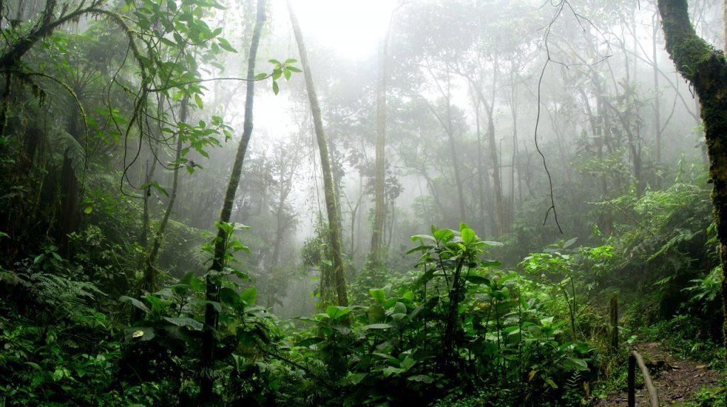 amazon weird travel destinations